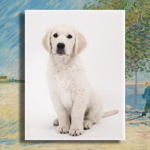 Huisdier gedenken porselein met foto