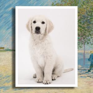 Porselein gedenkteken huisdier met witte rand