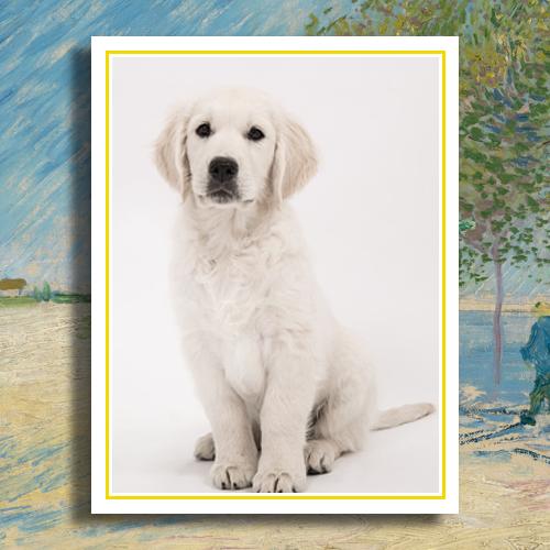 Huisdier foto op porselein 10 x 13 met gouden rand rechthoek