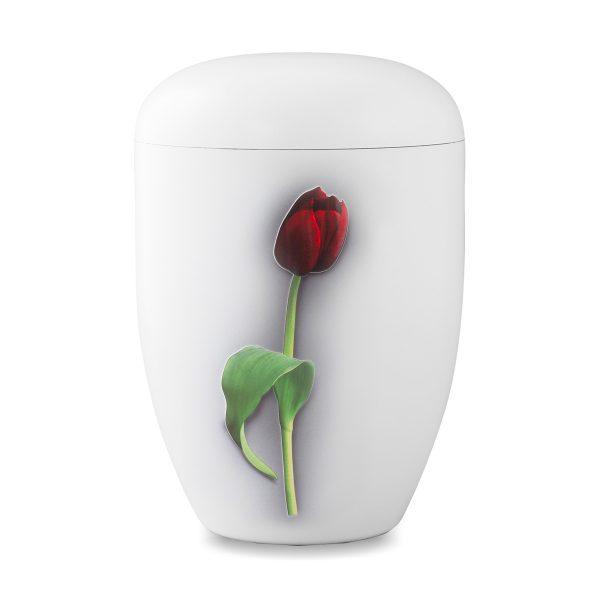 Biologische urn wit met tulp