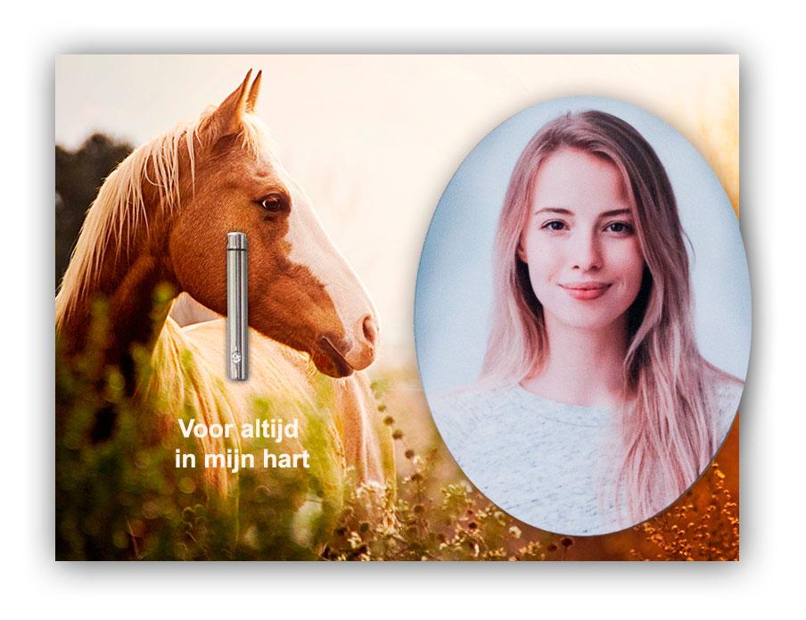 Mini Urn Foto Paarden Liefhebber Hobby